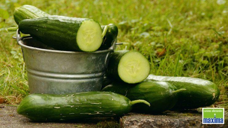 6 idées recettes pour découvrir ou redécouvrir le concombre et ses bienfaits !