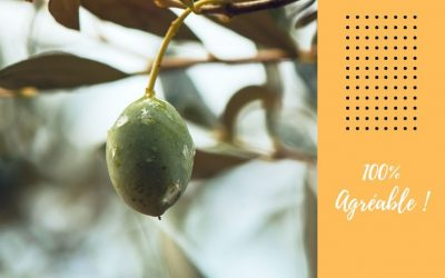 Les olives et la tapenade : Du soleil pour votre apéritif !
