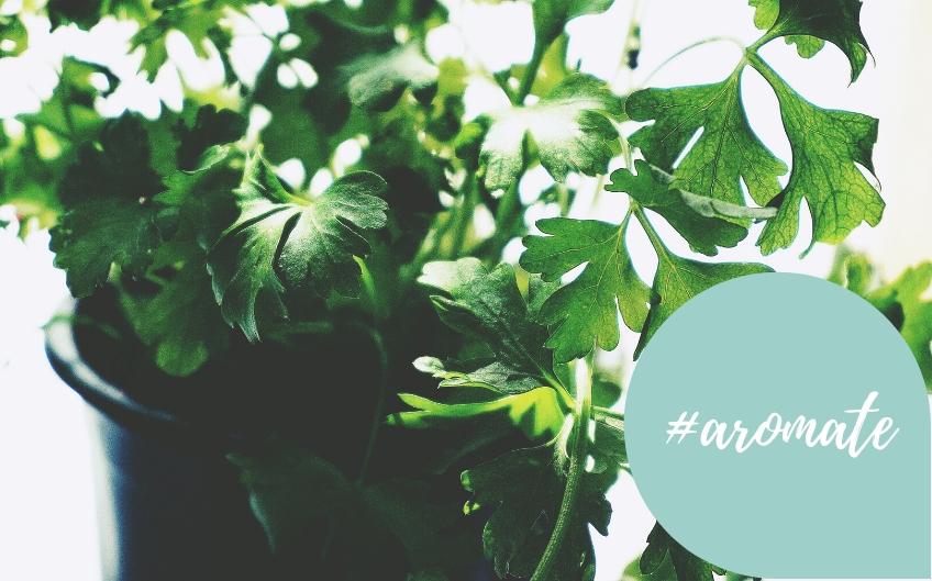 9 herbes aromatiques du jardin : Comment bien les utiliser